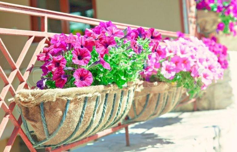 jardiner-sur-ton-balcon-5