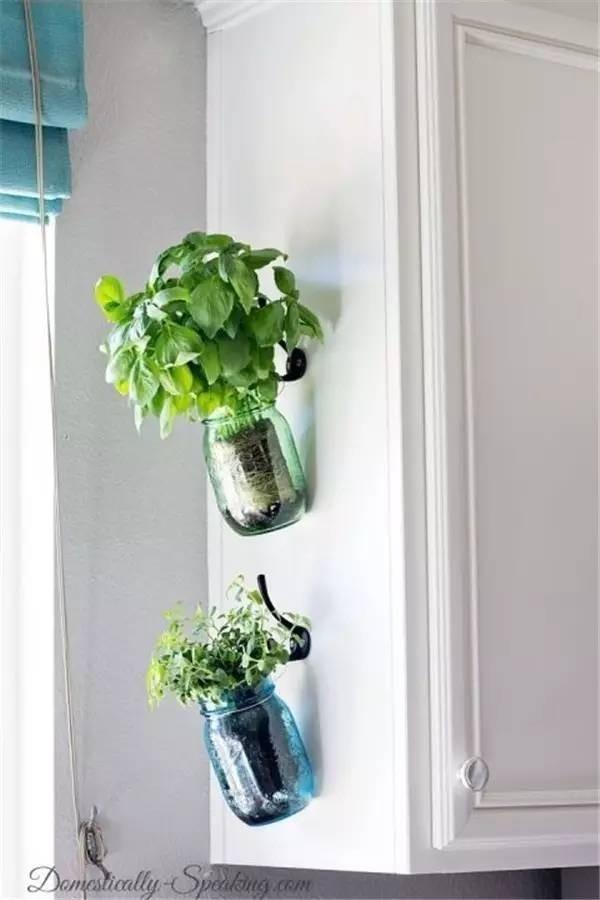 herbes-aromatiques-11