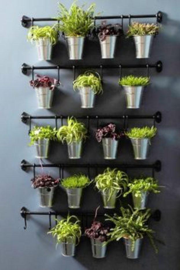 herbes-aromatiques-13