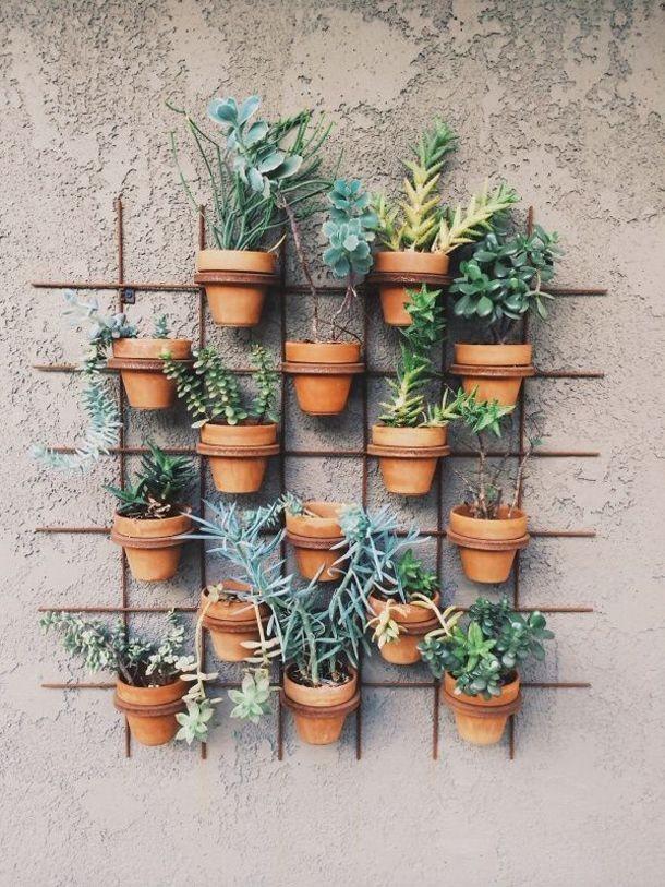 herbes-aromatiques-15