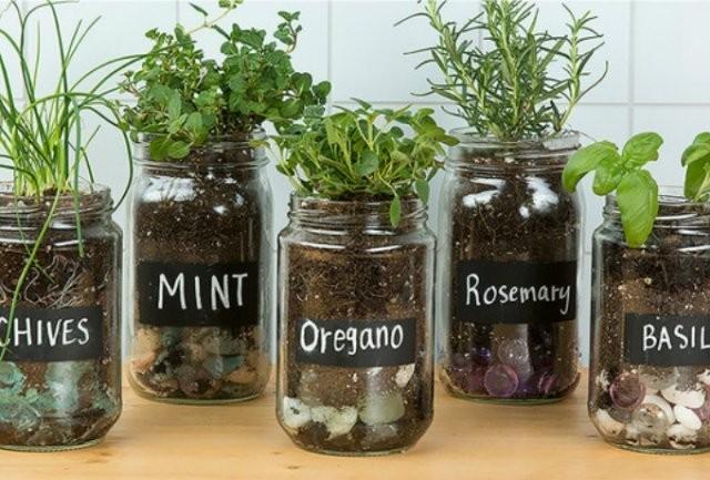 herbes-aromatiques-2