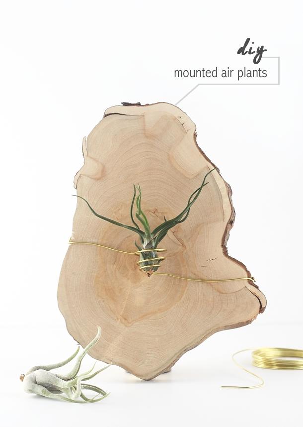 plantes-aeriennes-13