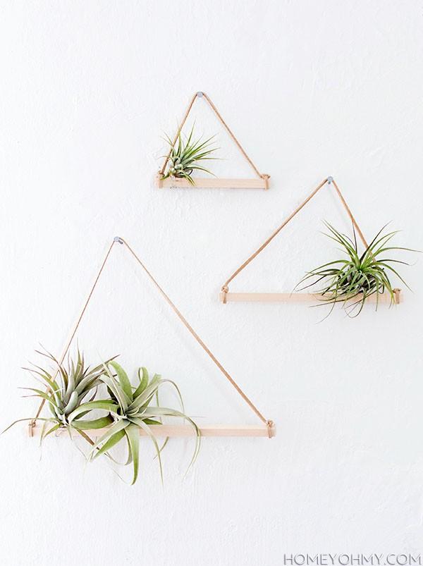 plantes-aeriennes-3