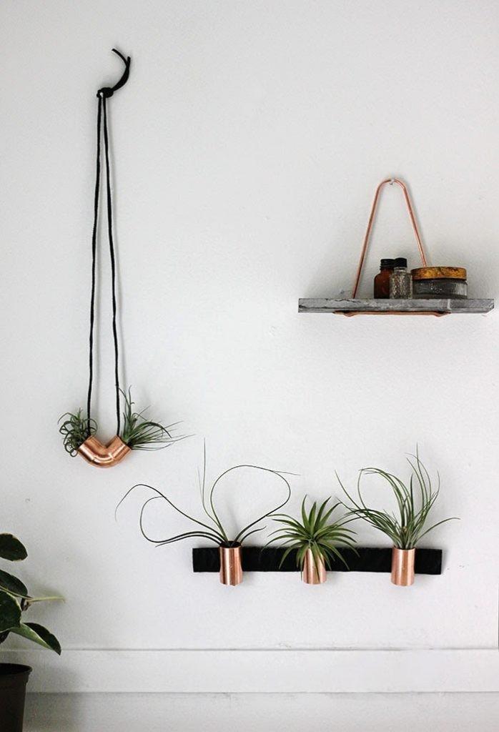 plantes-aeriennes-4