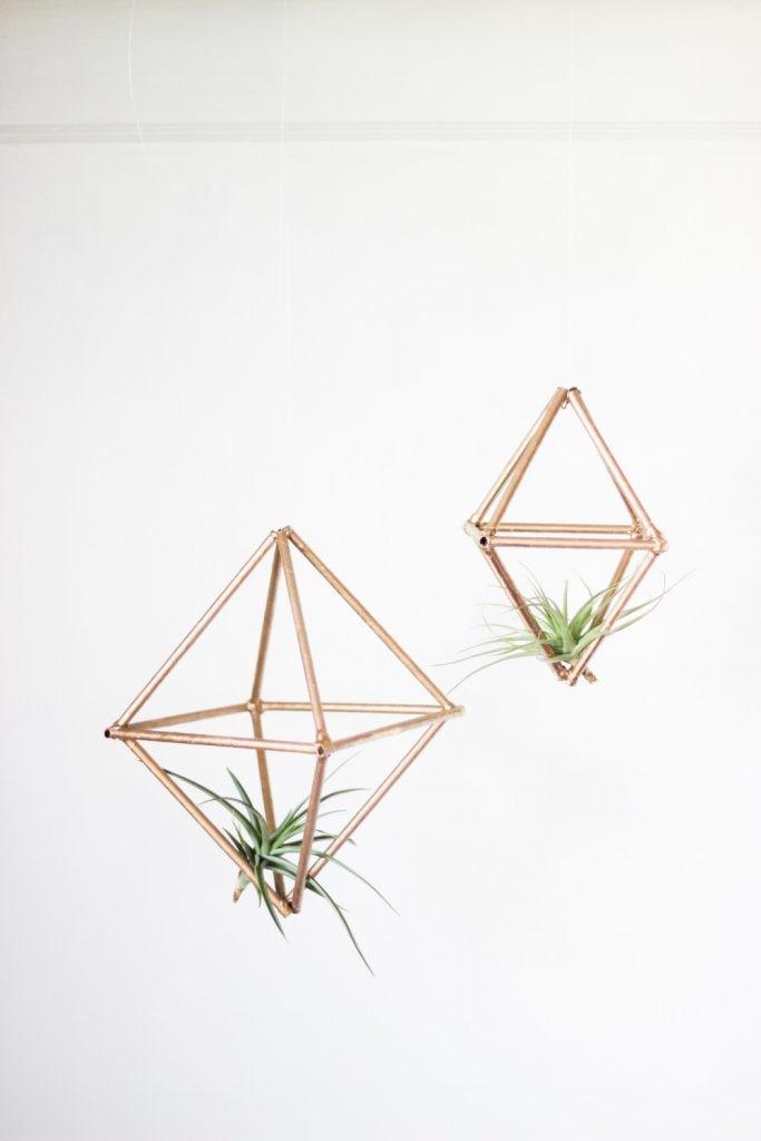 plantes-aeriennes-5