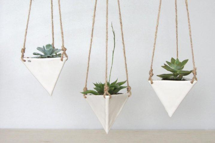 plantes-suspendus